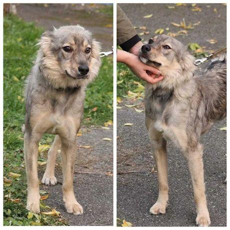 Зайка, особенная собака, спокойная и дружелюбная, стерилизована