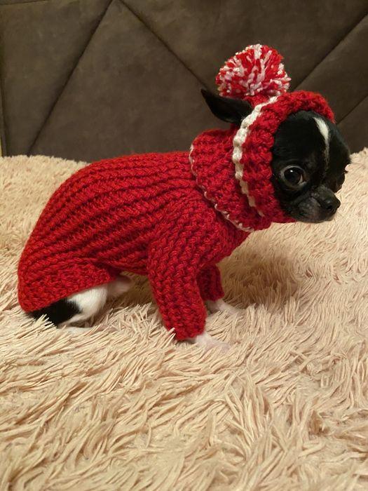 Одежда для собак и котов Ирпень - изображение 1