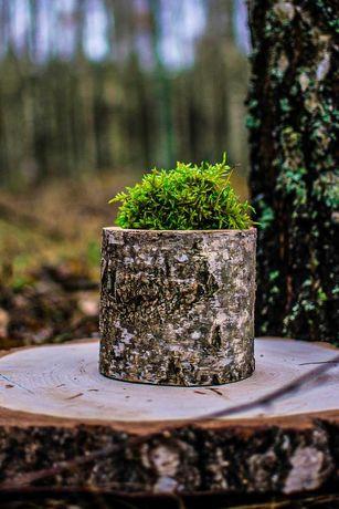 Drewniana doniczka brzozowa