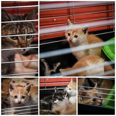 Wspaniała kocia rodzina szuka domu! Adoptuj!