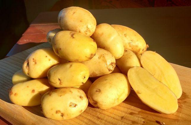 Sprzedam Młode ziemniaki