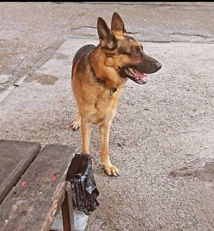 Пропала замечена собака по Победе