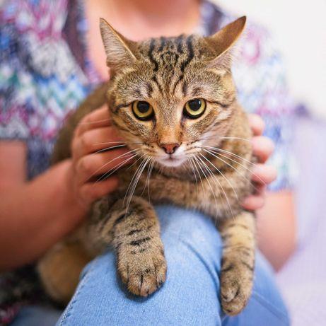 смугастий котик з товстими щоками 1р