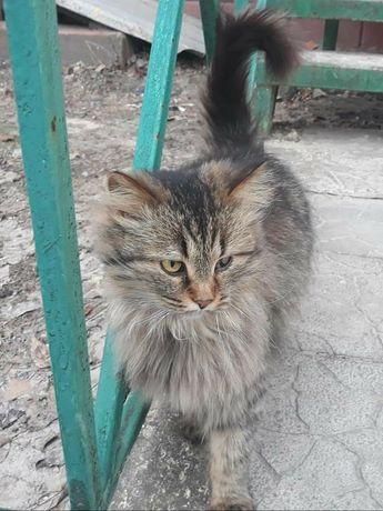 Кошечка сибирячка ищет дом! Северодонецк и обл.
