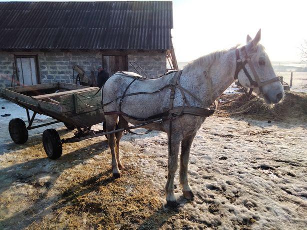 Продам жеребця, коня, кобилу.