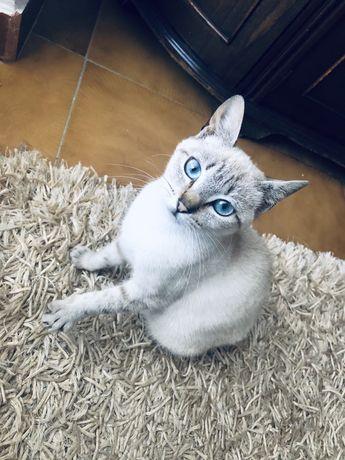 Gatinha (para adopção)