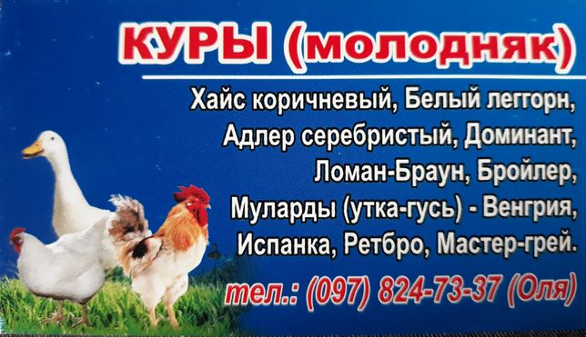Куры , цыплята , утки , гуси молодняк