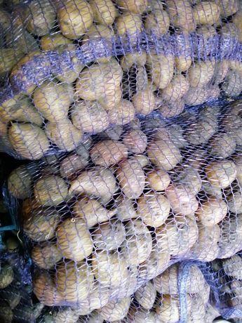 Картошка ПОСЕВМАТ сорта Славянка