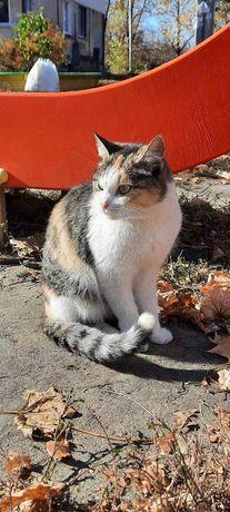 Найдена приблудилась трехцветная кошка метро Армейская