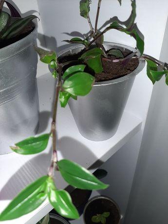 Щепки рослин ...