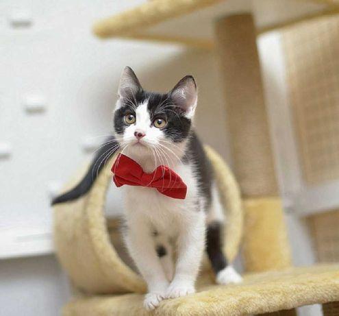 отдам котенка мальчик, 3 месяца