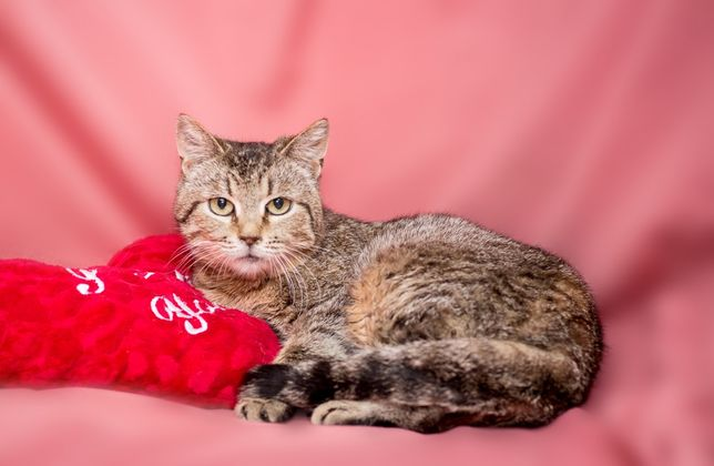 Маленька киця Мая в мріях про родину, 1рік, кольорова, кішка, кіт