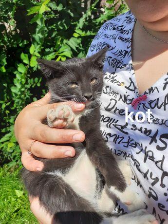 Oddam kotki w dobre ręce