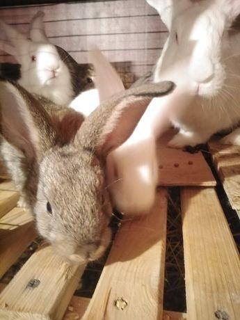 Кролики от месяца. Запорожье