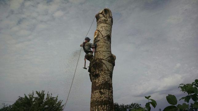 Спилим дерево любой сложности, напилим на дрова
