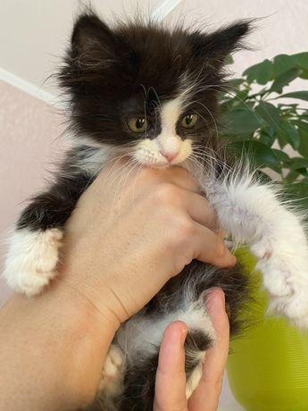 Бесплатно котёнок в добрые руки