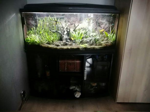 Akwarium 250 litrów