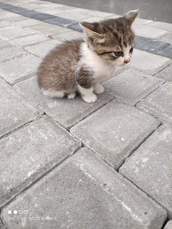 Віддамо в хороші руки  кошеня