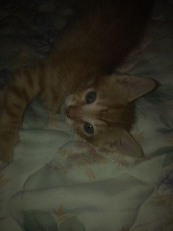 Dou gatinho amarelo bebe