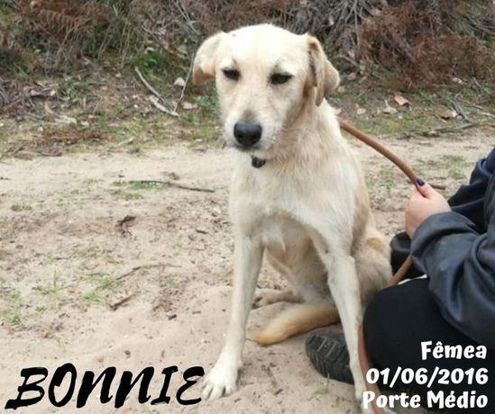 Cadela Porte Médio Para Adoção (Bonnie)