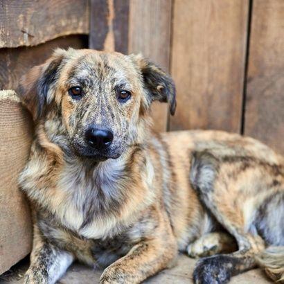 Трогательный мальчик Леон ищет семью щенок щенки щенята пес щеночки