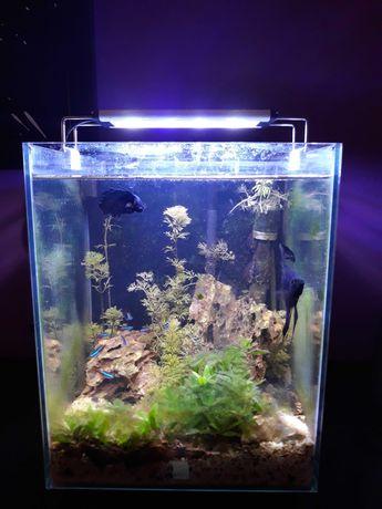 Aquario decorativo