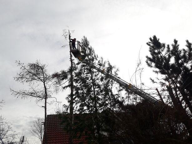 Wycinka drzew, krzewów, usówanie powalonych drzew