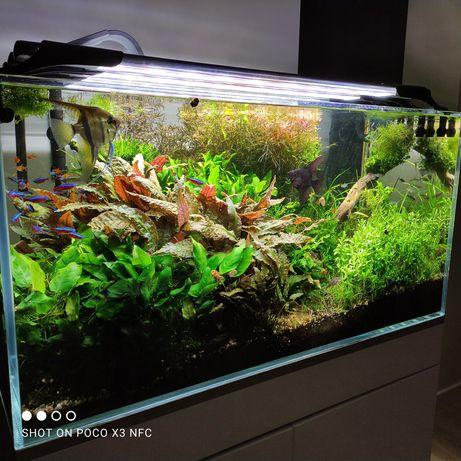Duży zestaw ładnych i łatwych w uprawie roślin akwariowych