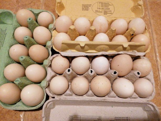 Jajka wiejskie 100 % EKO
