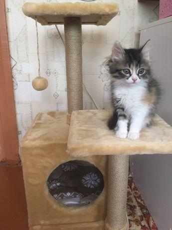 Когтеточка Домик для кота и кошки Лежанка Дряпка Производитель Подарок