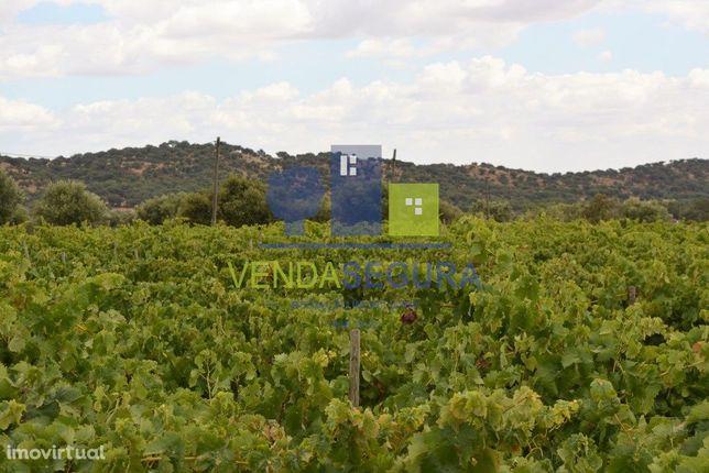 Terreno agrícola com vinha em Selmes | Vidigueira
