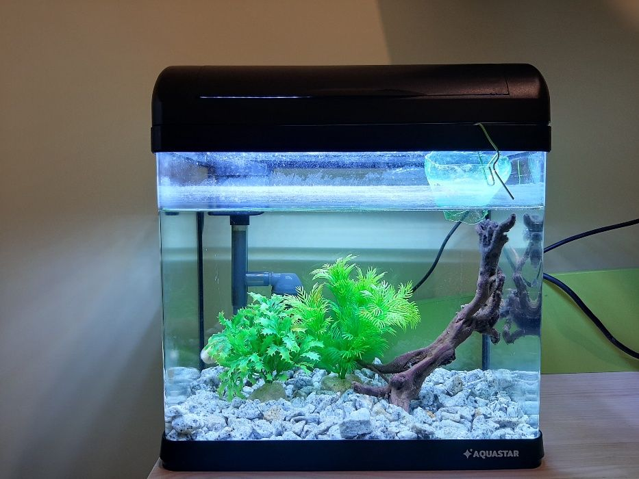 Akwarium 15 litrów