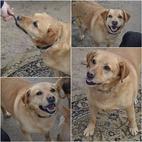 Do adopcji za darmo czytaj opis pies