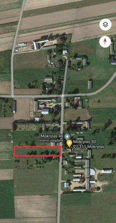 Działka rolno-budowlana Mokrylas gm. Wąsewo powierzchnia 0.22 ha