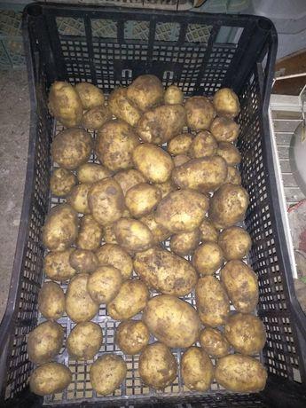 Ziemniaki młode ekologiczne