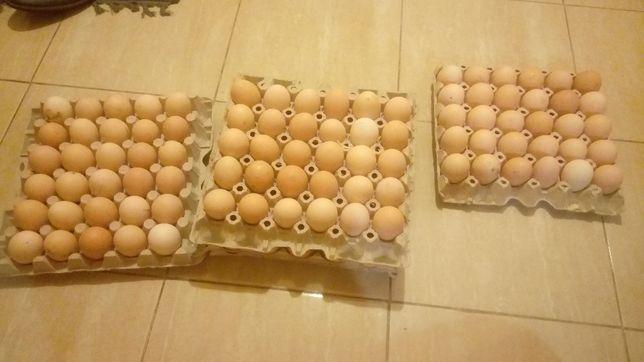 Jaja wiejskie u KAZIKA iBARBARY kupisz a nie pożałujesz