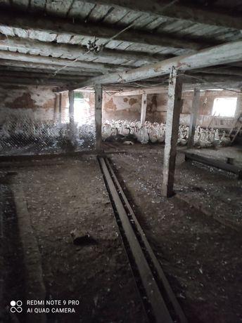 Продам ферму, птичник, телятник в Солонянском районе Днепр