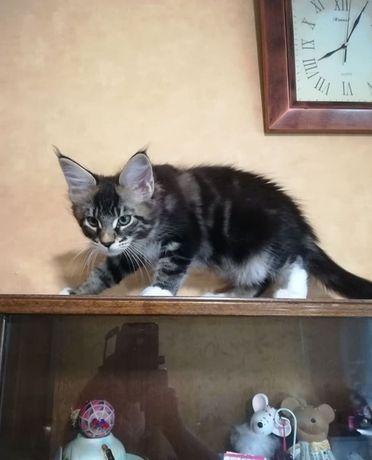 Кошечка Шанталь, 3 месяца
