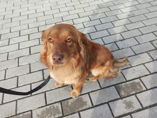 Mlody pies Tofik szuka domu