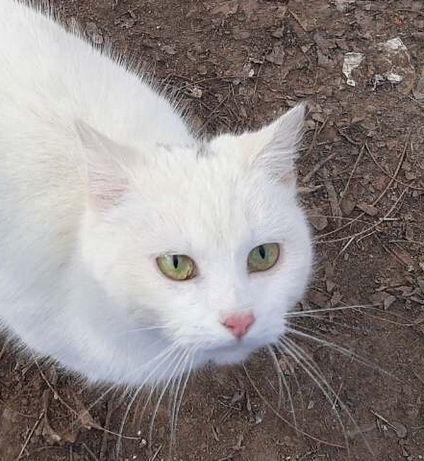 Отдам белого кота, ,8 месяцев