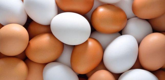 Dobre swojskie jaja. Jajka kur z wolnego wybiegu.