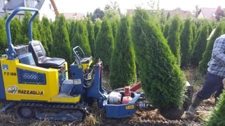 TUJA SZMARAGD Thuja smaragd 300 cm kopane maszyna TRansPOrt
