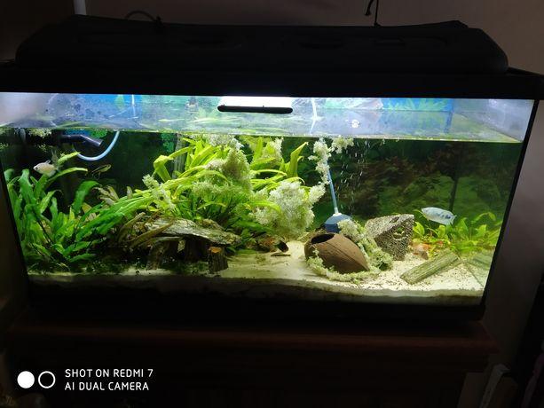 Akwarium 112l z wyposażeniem