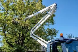 Wycinka drzew - NAJTANIEJ - sprawdź