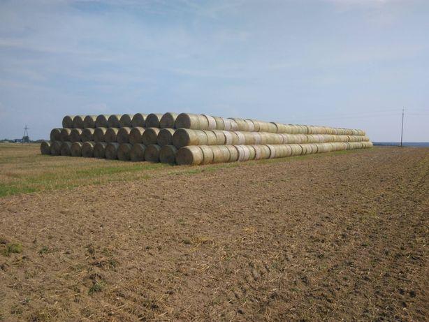 Słoma sucha bale 165 cm duża ilość