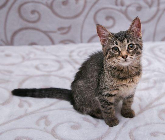 Очаровательный котенок для Вас