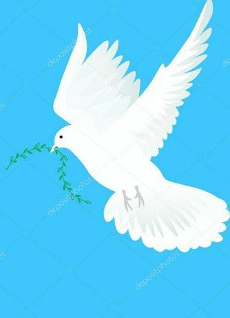 Праздничные голуби, для юбилей, венчания, свадьбы.