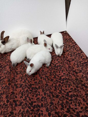 Кролики, кролі, кроленята