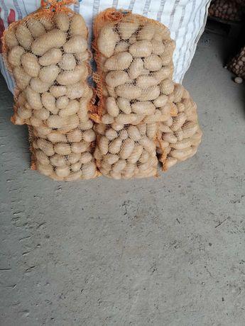 Ziemniaki jadalne jelli, sagita, bellarosa oraz sadzeniak