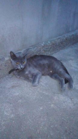 Пропала кошка помогите найти!Блоква.За вознаграждение!